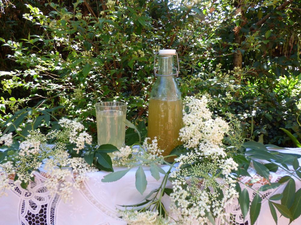 Elderflower Summer Drink